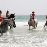 Schwimmen mit den Pferden